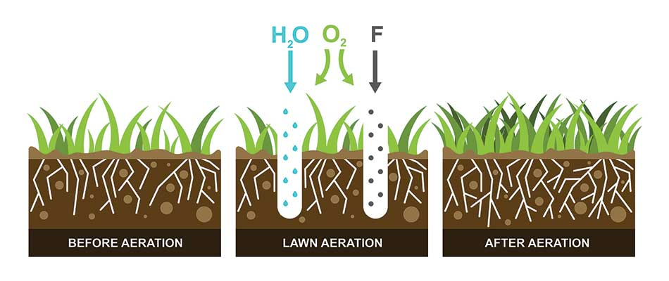 Infographic about core aeration for lawns in Granger, IN.