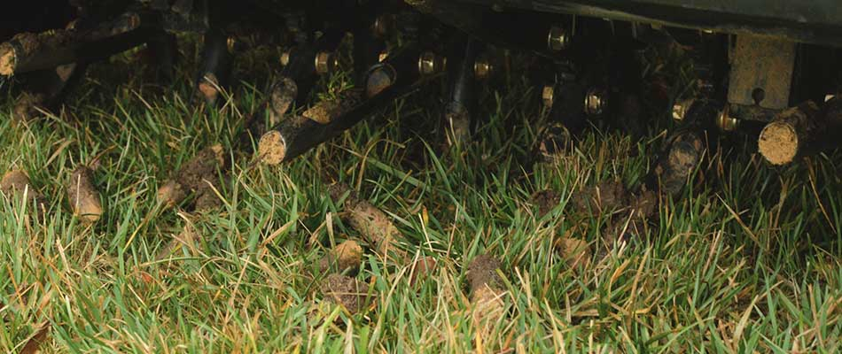 Your Lawn is Aerated and Overseeded, Now What?