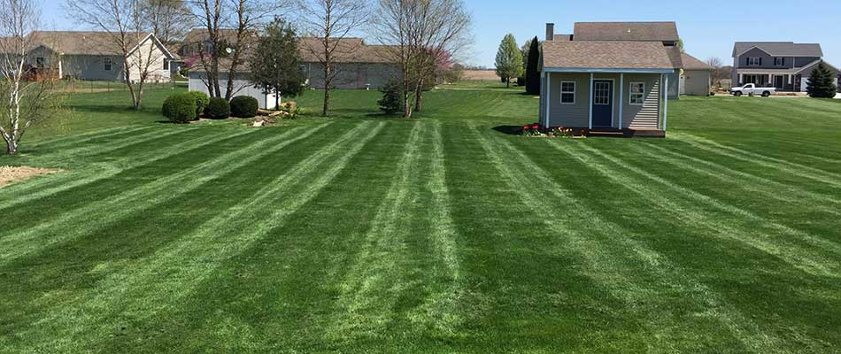 3 Reasons You May Need Spring Lawn Restoration Services