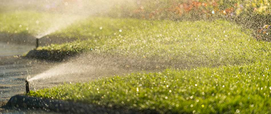 Drip Irrigation vs Traditional Sprinkler Systems