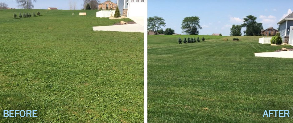 Healthy lawn with fresh mowing and fertilizer lines in Elkhart, IN.