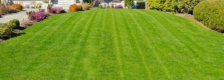 Lawn fertilization treatments in Granger, IN.
