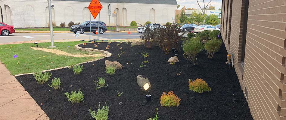 Commercial landscaping with dark mulch bed at Centier Bank in South Bend, IN.