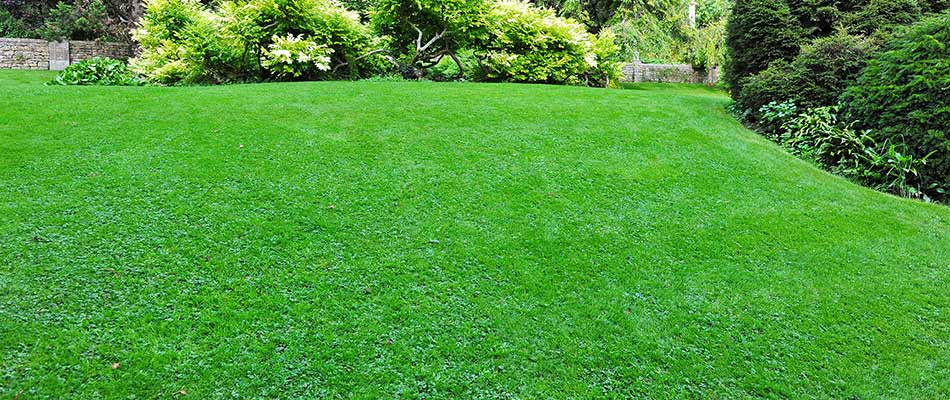 Lawn with regular fertilization services near South Bend, IN.