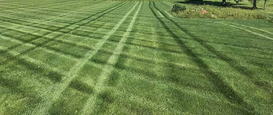 Lawn fertilizer lines on a bright green, healthy lawn in Osceola, IN.