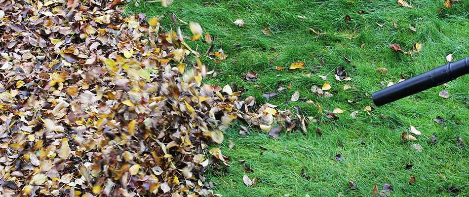 Leaves being removed during a fall yard cleanup in Elkhart, IN.